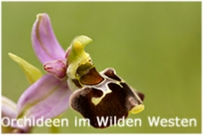 AS_Orchideen im Wilden
